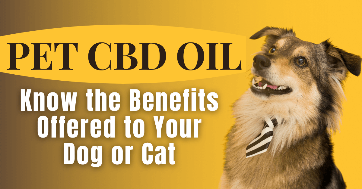 Pet CBD Oil: Know the Benefits Offered to Your Dog or Cat